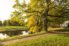 Autumn path. (fedoseenko) Tags: санктпетербург россия красота colour природа beauty blissful loveliness beautiful saintpetersburg sunny art shine dazzling light russia day green park peace garden blue white голубой небо лазурный color sky pretty sun пейзаж landscape clouds view heaven mood summer serene golden gold gate colours picture hall road tree grass nature alley history trees tsar stairway walkway field autumn river lake water reflection outdoors old d800