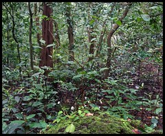 Forest (indianature13) Tags: matheran biosphere 2018 september monsoon maharashtra india westernghats nature indianature nearmumbai forest jungle hills mountains 700m cloud mist flora wildflora monsoonflora panoramapointhike panoramapoint