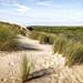 Au sommet de la Dune