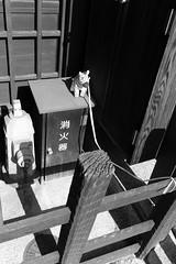 Takayama (fabiolug) Tags: zebra leash cord fence toy animal hydrant building takayama street streetphotography japan 東京 日本 japanese asia leicammonochrom mmonochrom monochrom leicamonochrom leica leicam rangefinder blackandwhite blackwhite bw monochrome biancoenero 35mmsummicronasph 35mmf2summicronasph summicronm35mmf2asph summicron35mmf2asph 35mm summicron leicasummicron leica35mm stuffedanimal
