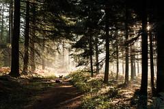 Early Light (Rogier Noort) Tags: dogs evi luke leia forest