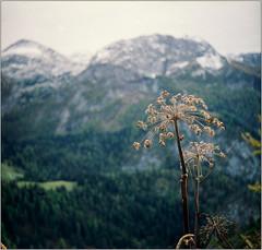 *\ (Ulla M.) Tags: taxona berge berchtesgadenerland bayern analog 24x24 kleinbild canoscan8800f fp4 selfdeveloped selbstentwickelt mountains umphotoart freihand analogue film filmshooter analogphotography filmphotography landschaft landscape berchtesgaden dof