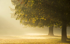 Basking in the Light (Tracey Whitefoot) Tags: 2018 tracey whitefoot nottingham nottinghamshire wollaton hall deer park autumn fall morning tree light sunrise notts atmosphere mood moody mist misty october