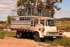 Backwater Bedford (ekawrecker) Tags: truck lorry sa