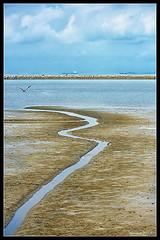 Into the blue sky (VERODAR) Tags: sea sky bird nature natureandwildlife clouds sand tanjungpiai nationalpark johor nikon verodar veronicasridar