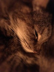 More Precious Than You (Rantz) Tags: rantz mobilography 365 roger doesanyonereadtagsanymore 23onthe23rd victoria melbourne bonnie animal cat cats