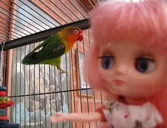 BaD: 19th October 2018 - Hitchcock Movie 'The Birds' (Calendar girl 48 / grannygreen) Tags: blythedolls middie candy badoct2018hitchcockmovies thebirds lovebird bonnie
