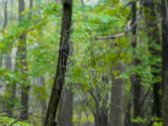 P1020168 (rpealit) Tags: scenery wildlife nature weldon brook management area