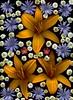 59238.01 Cichorium intybus, Tanacetum parthenium 'Plenum', Hemerocallis '24 Carat Gold', Portulaca umbraticola (horticultural art) Tags: cichoriumintybus cichorium chicory tanacetumpartheniumplenum tanacetum hemerocallis portulacaumbraticola