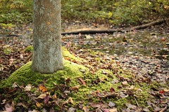 Time to vacuum (cathetercart) Tags: moss sphagnum pine barrens new jersey foliage leaves autumn fall swamp