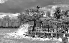 É Primavera....  Foto Marcus Cabaleiro Site: https://marcuscabaleirophoto.wixsite.com/photos  Blog: http://marcuscabaleiro.blogspot.com.br/  #marcuscabaleiro #santos #brasil #natureza #fotografia #tu #photographer #ressaca #photography #brazil #nikon #olh (marcuscabaleiro4) Tags: porrada tu brazil olhaaonda ressaca energia brasil primavera céufechado olhares fotografia mureta nikon força marcuscabaleiro photographer natureza photography santos
