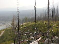 Maligne Lake Road (pamfromcalgary) Tags: malignelakeroad scenery landscape forest forestfire jasper