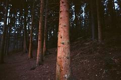 Trees (Jim Davies) Tags: england britain canon kodak ektar 100 100asa colourfilm 35mm film filmfilmforever analogue veebotique slr 2017 believeinfilm winter filmisnotdead filmisalive uk
