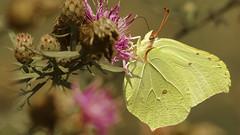000001 (andrzejreschke) Tags: insects reptiles plants grass nature butterfly lizard moss flowers beauty beautyofnature