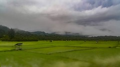 Padi fields Banda Aceh (Ahmed N Yaghi) Tags: rice plantation fields padi banda aceh indonesia green mountains clouds cottage vegetation agriculture forests blurr