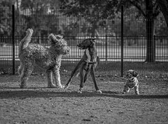 Today's Release From Pain (Ron Perrillo) Tags: dogs dogrescue dogsbestfriend hilarious moments comical play thankful frozen hornerpark chicago nikond750 nikon85mmf18g