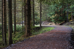 Around The Bend (Click And Pray) Tags: managedbyclickandpraysflickrmanagr treeline horizontal scotland argyll landscape wild track forest ardentinny road bend corner treelinehorizontalscotlandargylllandscapewildtrackforestardentinnyroadbendcornergbr