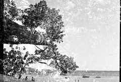 0001140-R1-E022 (gracito14) Tags: yashica fx3 super2000 fujifilm acros 100 blackwhite blackandwhite bw film slr north beach burlington vermont lake champlain tree doubleexposure doubleexposed