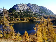 Auf der Tauplitzalm / At alp Tauplitzalm (rudi_valtiner) Tags: tauplitzalm alm alp see lake bergsee mountainlake wasser water totesgebirge alpen alps lärchen larches larix herbst autumn fall badmitterndorf ausseerland salzkammergut steiermark styria österreich austria autriche grossee bäume trees landschaft landscape traweng berg mountain wald forest felsen rocks natur nature fe
