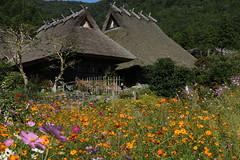 Miyama in autumn (yukky89_yamashita) Tags: 京都 南丹市 美山 秋 かやぶきの里 flowers autumn japan kyoto miyama nantan