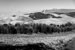 Toscane-14 (rwscholte) Tags: valdorcia italy sanquiricodorcia landscape grass tuscany toscana monochrome blackandwhite leica dlux rwscholte reinscholte