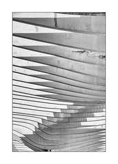 El Palmeral de Las Sorpresas (Olivier Faugeras) Tags: espagne malaga andalousie nb bw noiretblanc pentax minimalism minimalisme andalucía andalucia andalousia
