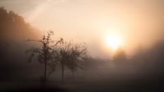 Golden October - at my front door (ursulamller900) Tags: pentacon2829 sunrise sonnenaufgang orchardmeadow obstbaumwiese nebel fog autumn october herbst golden landscape landschaft