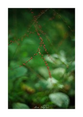 2018/9/14 - 6/15 photo by shin ikegami. - SONY ILCE‑7M2 / Lomography New Jupiter 3+ 1.5/50 L39/M (shin ikegami) Tags: macro マクロ flower 花 井の頭公園 吉祥寺 summer 夏 sony ilce7m2 sonyilce7m2 a7ii 50mm lomography lomoartlens newjupiter3 tokyo sonycamera photo photographer 単焦点 iso800 ndfilter light shadow 自然 nature 玉ボケ bokeh depthoffield naturephotography art photography japan earth asia