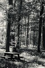 « A m'assoir sur un banc cinq minutes avec toi . Regarder le soleil qui s'en va Te parler du bon temps qu'est mort et je m'en fous Te dire que les méchants c'est pas nous ...., »                                                                 Renaud (OGNB) Tags: nb ciel banc château chambord forêt