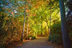 Autumn   Rosental Leipzig (Photography by Eric Hentze) Tags: autumn nikon nikond7100 wald forest leipzig landschaft city germany herbst colorful d7100 erichentze outdoor october 2018 warm sunshine sun travel saxony