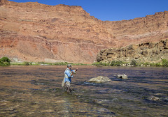 Lone Fly Fisherman on the Colorado river near Lees Ferry, Arizona. (Ray Redstone) Tags: flyfishing flyfishingarizona fishing coloradoriver troutfishing anglerinaction flycasting outdooractivity canyon redrock river stream water lees ferry fly