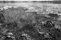 Mono Lake Shrub (NormFox) Tags: bw bnw beach blackandwhite blackandwhiteartistry california clouds lake landscape monolake monochrome mountains outdoor reflection rocks sky tufa water leevining unitedstates us