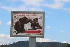 Bear sanctuary (ec1jack) Tags: ec1jack kierankelly september 2018 summer holiday europe eastern transylvania romania canoneos600d bearsanctury zarnesti libearty bear sanctuary