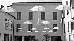 Faenza Parasols (@WineAlchemy1) Tags: faenza parasols umbrellas emiliaromagna italy blackwhite monochrome neroebianco noiretblanc corsogiuseppemazzini parapluies