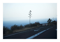 _K001279 (Jordane Prestrot) Tags: ♍ jordaneprestrot tenerife elchorillo arbre tree árbol route road ruta sunset crépuscule crepúsculo océan ocean océano atlantique atlantic atlantico
