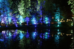 2018 - 4.10.18 Enchanted Forest (97) (marie137) Tags: forest lights trees show marie137 bright colourful pitlochry treeman attraction visit entertainment music outdoors sculptures wicker food drink family people water animation