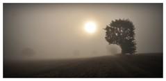 foggy morning (Uli He - Fotofee) Tags: ulrike ulrikehe uli ulihe ulrikehergert hergert nikon nikond90 fotofee nebel morgen morgenerwachen morgenspaziergang meditation sonne morgensonne haune burghaun