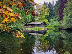 The cabin on the pond (walneylad) Tags: murdofrazerpark northvancouver britishcolumbia canada park parkland urbanpark woods woodland forest urbanforest rainforest trees stump leaves ferns trail water creek brook stream rocks pond duckpond october fall autumn afternoon colour color green brown yellow orange red nature view scenery