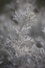 Jeune branche blanche (gaillardou) Tags: serres municipale toulouse fleur plante automne feuille flower plant green culture plantation