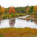 DSC03208 - Mill Pond