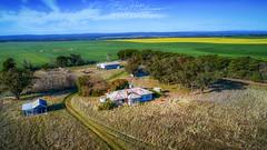 Canola Fields of Victoria (B3nny2099) Tags: aerial canolafields victoria australia au phantom4pro dji drone greengold