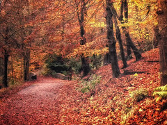 Autumn path (xDigital-Dreamsx) Tags: autumn fall seasons red yellow leaves path track trail walk wood woodland trees nature naturephotography countryside rural foliage day golden texture