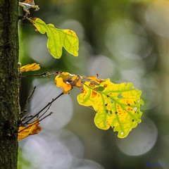 To Coombe Country Park and Back 6th October 2018 (boddle (Steve Hart)) Tags: stevestevenhartcoventryunitedkingdomcanon5d4 to coombe country park back 6th october 2018 steve hart boddle steven bruce wyke road wyken coventry united kingdon england great britain canon 5d mk4 6d 100400mm is usm ii wild wilds wildlife life nature natural bird birds flowers flower fungii fungus insect insects spiders butterfly moth butterflies moths creepy crawley winter spring summer autumn seasons sunset weather sun sky cloud clouds panoramic landscape unitedkingdom gb