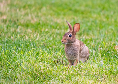 Rabbit (JuanJ) Tags: nikon d850 lightroom art bokeh nature lens light landscape happy naturephotography outside people white green red black pink skyportrait location architecture building city square squareformat instagramapp shot awesome supershot beauty cute new flickr amazing photo photograph fav favorite favs picture me explore interestingness friends dof kentucky ky august 2018 craborchard lincolncounty tamron