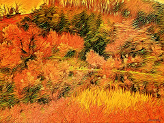 """nice autumn day (♣Cleide@.♣mostly off) Tags: © ♣cleide♣ brazil 2018 photo art digital ps textura field autumn filters colors artdigital exotic """"netartii"""" awardtree"""