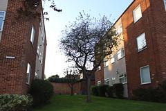 Flats (doojohn701) Tags: blocks apartments flats windows extractorfan xpelair brickwork tree vegetation sky sunlight architecture sidcup 1960s