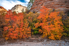 Zion East Side Washes Hiking! Zion National Park Fall Foliage Utah Autumn Colors Fine Art Landscape & Nature Photography! Sony A7R III & Sony FE 16-35mm f/2.8 GM G Master Lens! Sharp High Res Photography! A7R3 Elliot McGucken Art! Maples & Cottonwoods! (45SURF Hero's Odyssey Mythology Landscapes & Godde) Tags: zion east side washes hiking national park fall foliage utah autumn colors fine art landscape nature photography sony a7r iii fe 1635mm f28 gm g master lens sharp high res a7r3 elliot mcgucken maples cottonwoods peak np