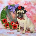 Remembrance Day Tribute thumbnail