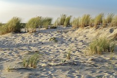 Bisacrosse (stephane.rigobert) Tags: biscarosse bisca dunes aube dawn