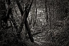 Passage (Jean-Marie Lison) Tags: eos80d sigmaart bruxelles molenbeek scheutbos bois forêt noiretblanc nb monochrome sentier